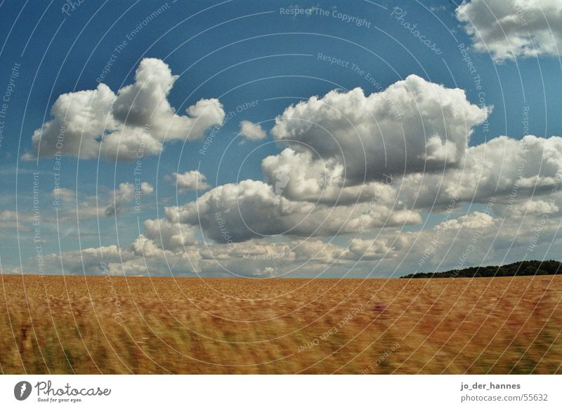 Wolkenfeld blau Wolken gelb Horizont Feld Korn