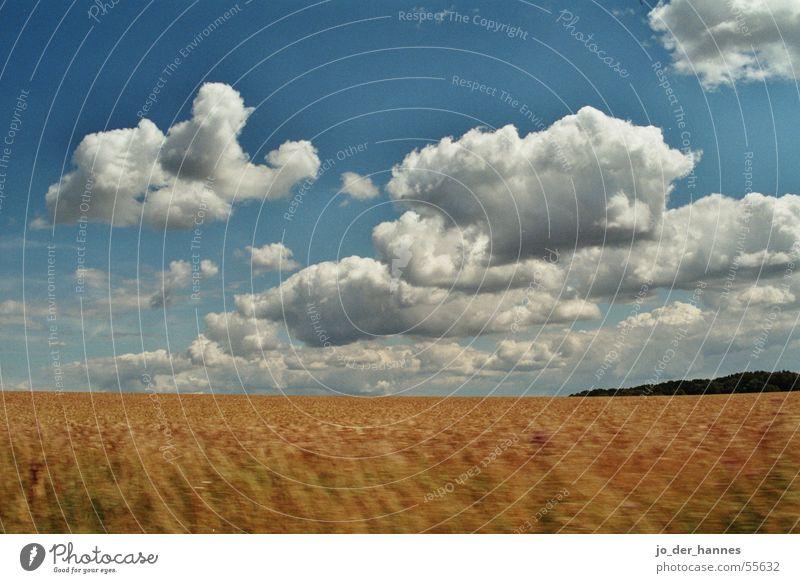Wolkenfeld Feld gelb Horizont clouds field crop Korn forest blue blau
