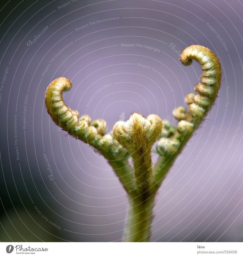 Farn Natur Wachstum Beginn neu aufwärts strecken