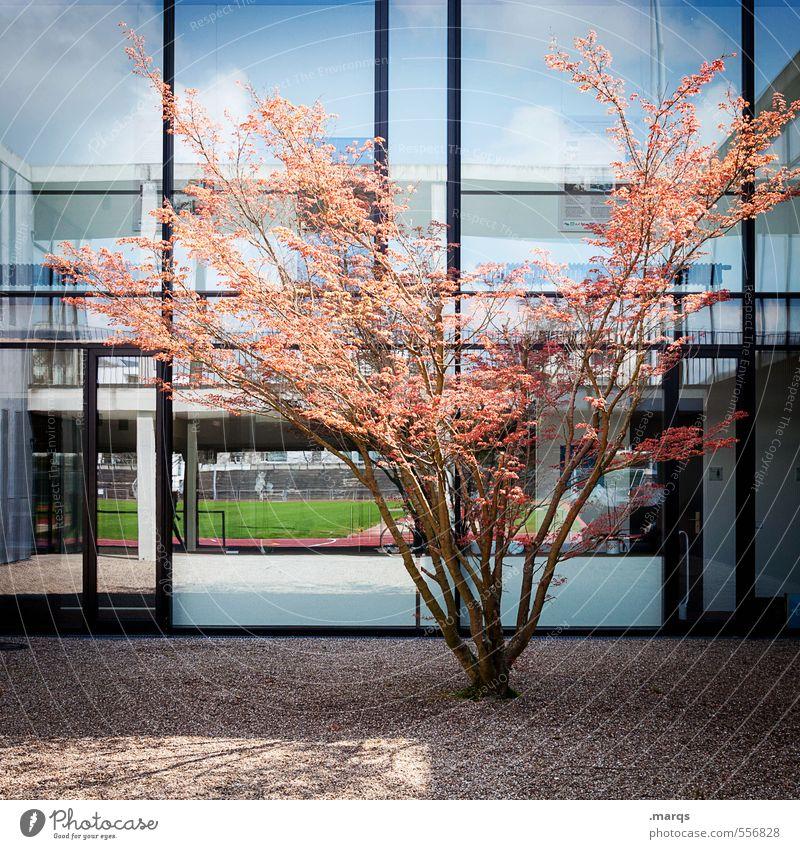 Bäumchen Natur blau Baum schwarz Fenster Leben Herbst Gebäude Architektur Stil hell Linie orange Fassade Design modern