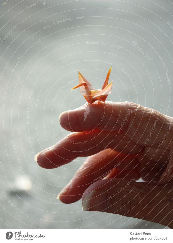 progress Hand rot Leben Senior hell Finger festhalten Hautfalten nah Großmutter sanft Großvater Seele Schwan Großeltern Origami
