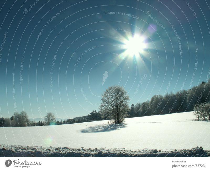 wintersun Winter Baum Licht weiß kalt Schnee Landschaft Sonne Beleuchtung Himmel blau Ferne