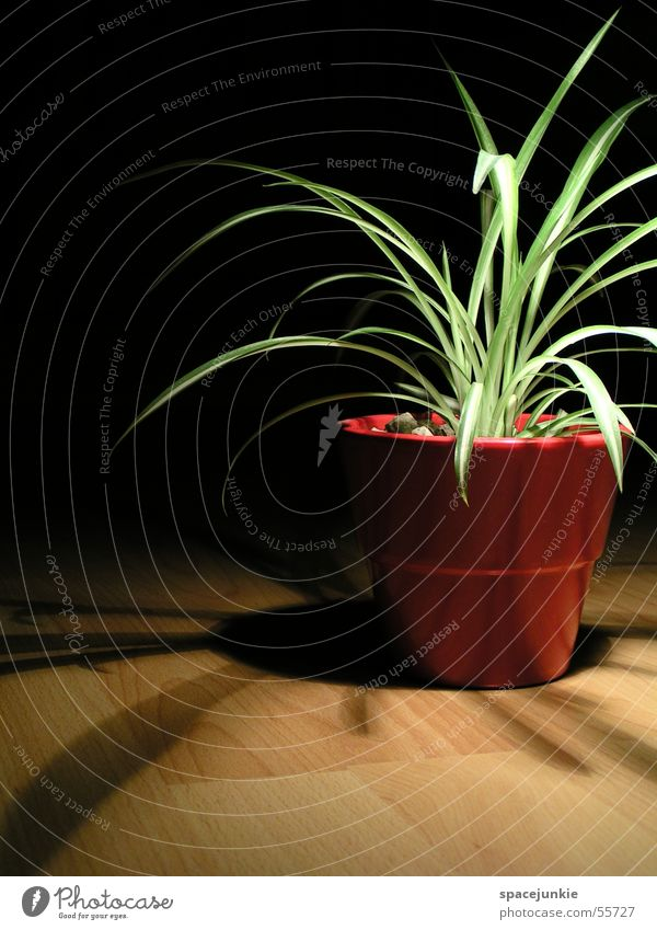 Schattenpflanze rot schwarz Kies Topf Zimmerpflanze Keramik Laminat