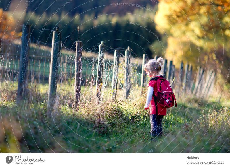 kleiner käfer Mensch Kind Mädchen Kindheit 1 3-8 Jahre Umwelt Natur Herbst Schönes Wetter Wiese Wald Erholung Blick träumen wandern frei Fröhlichkeit frisch