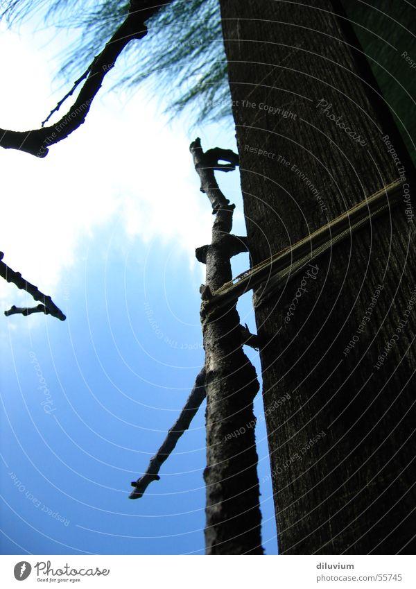 gebunden an Himmel Baum blau Holz Ast Schnur