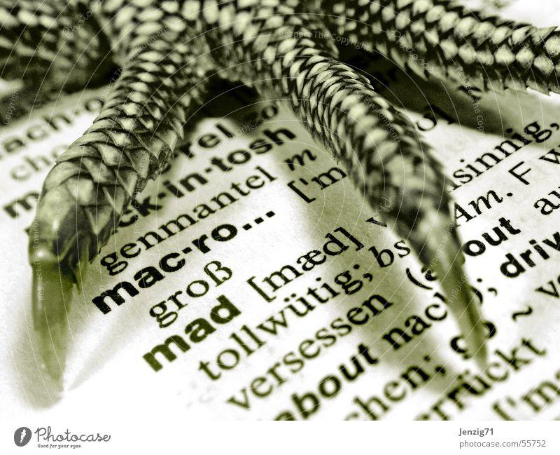 mac-ro...mad Buch Schriftzeichen Reptil Krallen Echsen Lexikon Agamen Wasseragame