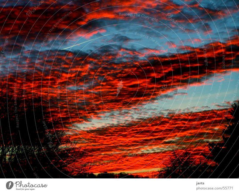...fire in the sky Himmel Baum blau rot Wolken Abenddämmerung Altokumulus floccus