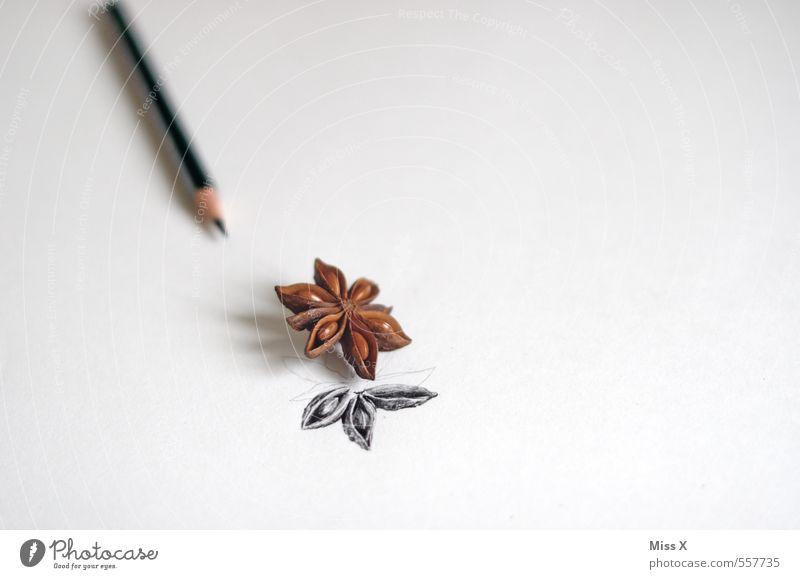 Sternanis Kräuter & Gewürze Freizeit & Hobby Kunst Duft zeichnen Bleistift malen Papier Schreibpapier Zeichenstift Farbfoto Gedeckte Farben Innenaufnahme