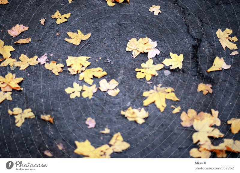 gelbe Sterne Natur Herbst Blatt Straße Wege & Pfade Stern (Symbol) Ahornblatt Herbstlaub Herbstfärbung herbstlich Boden liegen Sternenhimmel Farbfoto mehrfarbig
