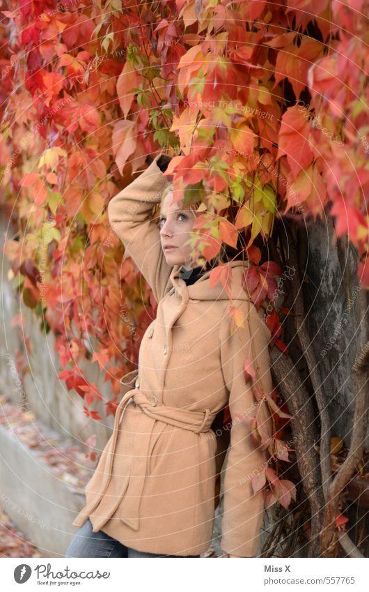 Roter Wein Mensch feminin Junge Frau Jugendliche Erwachsene 1 18-30 Jahre Herbst Sträucher Efeu Blatt Mode Jacke Mantel blond schön Wilder Wein Weinblatt