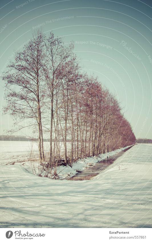 is` kalt Umwelt Natur Landschaft Pflanze Himmel Wolkenloser Himmel Sonnenlicht Winter Klima Schönes Wetter Schnee Baum Feld ästhetisch blau weiß schön Schatten