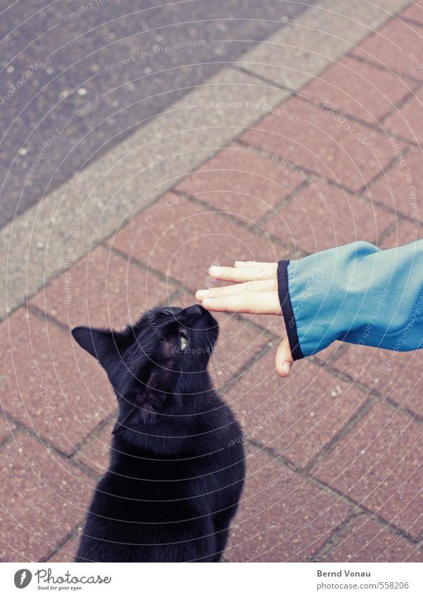 schnüff Katze Mensch Kind blau schön weiß Hand ruhig schwarz Junge grau maskulin Kindheit sitzen Finger Nase