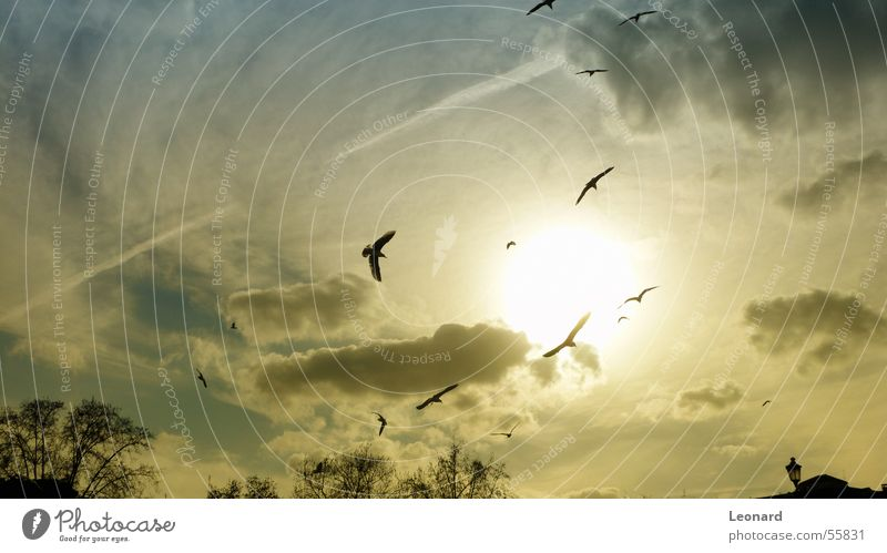 Vögel Himmel Baum Sonne Wolken gelb Vogel