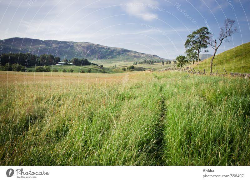 Trampelpfad harmonisch ruhig Meditation Spielen Ausflug Abenteuer Natur Landschaft Sommer Schönes Wetter Pflanze Baum Gras Wiese Hügel laufen grün Stimmung