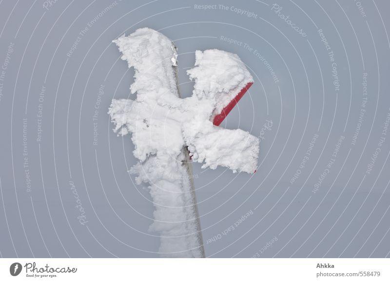 kalt Natur schön Einsamkeit Winter Schnee Gefühle grau Eis Klima Wachstum Perspektive Zukunft Kommunizieren Vergänglichkeit Wandel & Veränderung Frost