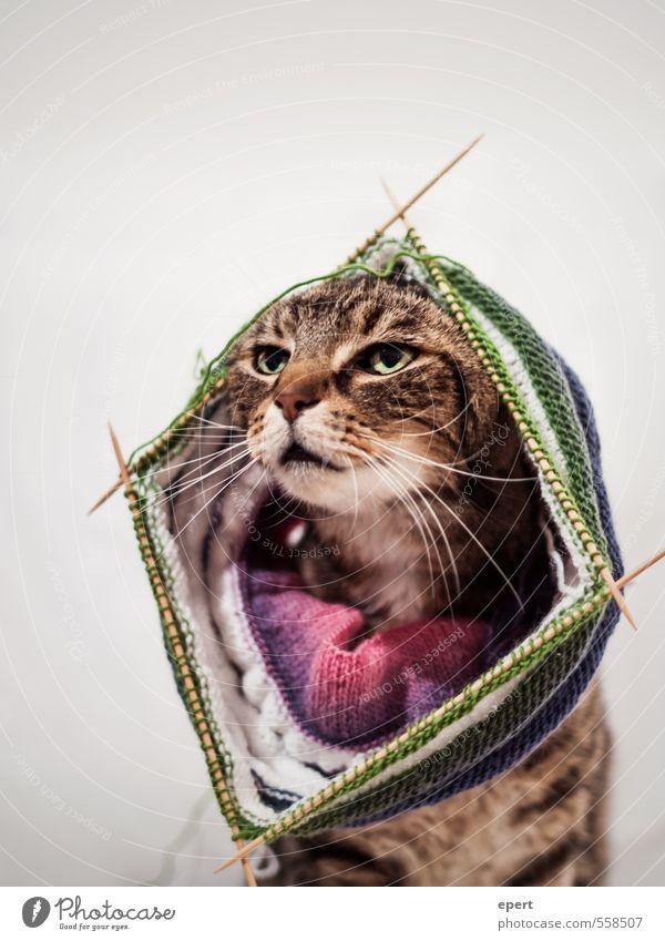 Chic in Strick Katze Freude Tier lustig Mode Kunst Freizeit & Hobby elegant Lifestyle Bekleidung ästhetisch Fröhlichkeit einzigartig Kreativität Neugier Mütze