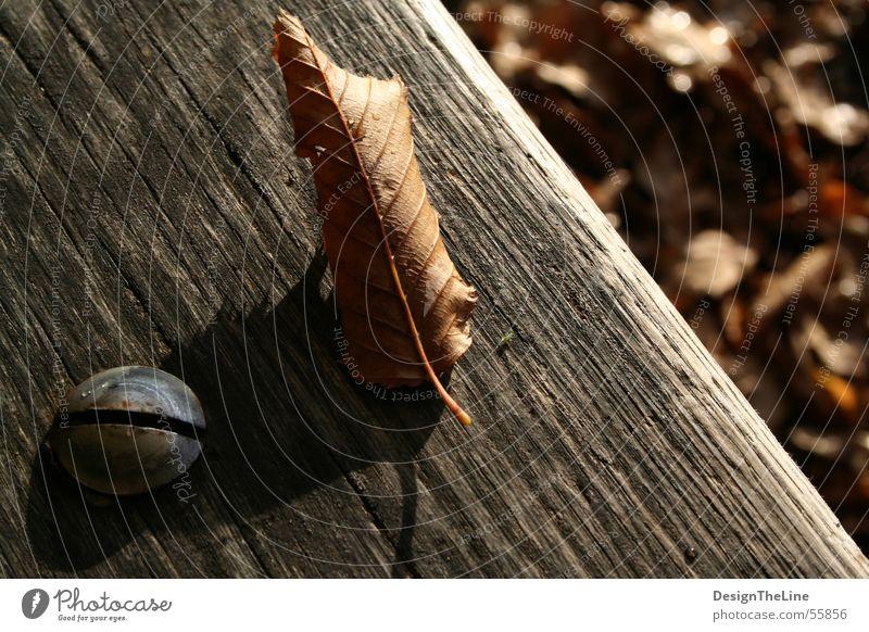 Schraube - Blatt ( -Laus ) alt grün Blatt Herbst Holz Wärme Metall dreckig klein Wassertropfen Ordnung Bank Bodenbelag Insekt verfallen trocken