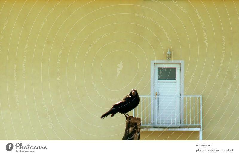 Türsteher Haus gelb Mauer Vogel Balkon Wachsamkeit Pfosten Rabenvögel Krähe