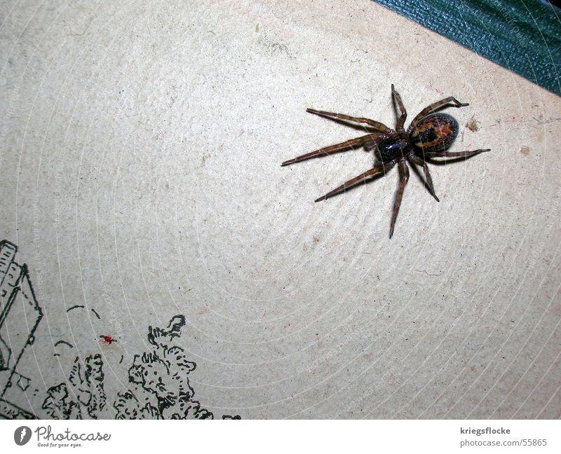 arach Spinne Achtbeiner Ekel Buch Angriff spider Angst