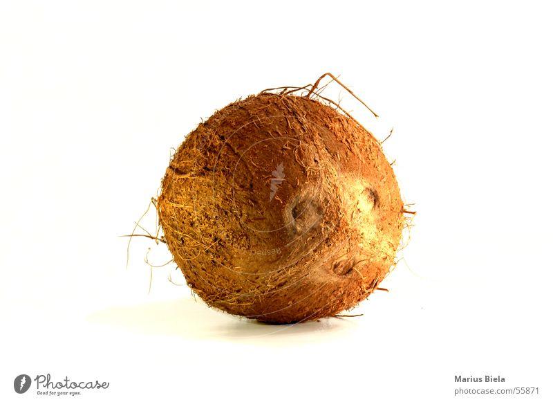 harte Schale Ferien & Urlaub & Reisen Strand braun Palme Nuss Frucht Kokosnuss Kokospalme