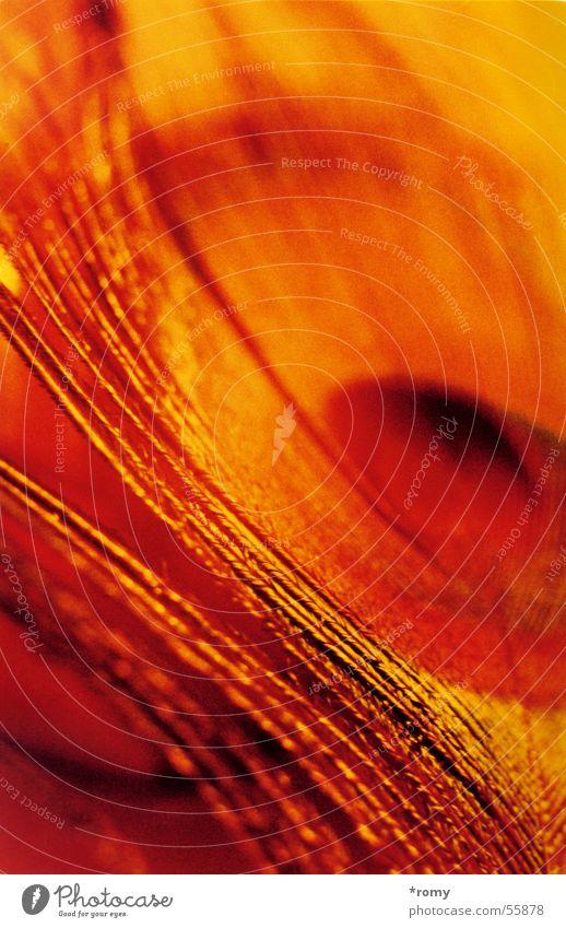 Pfauenauge rot gelb orange Feder Pfauenfeder