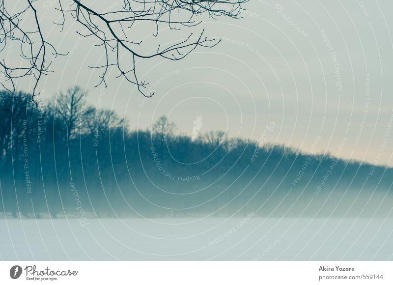 The breath of winter Natur Landschaft Winter Nebel Eis Frost Schnee Baum Feld Wald berühren dunkel kalt blau gelb schwarz weiß Gefühle Traurigkeit Einsamkeit
