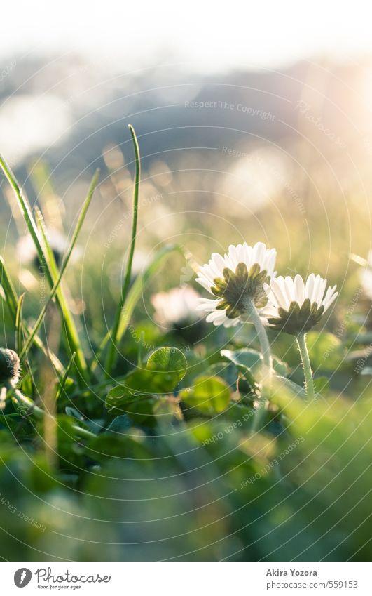 Growing up together Natur Pflanze Tier Sonnenlicht Frühling Schönes Wetter Blume Gras Park Wiese beobachten berühren Blühend glänzend Wachstum Zusammensein