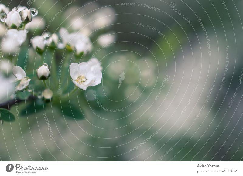 Frisch geduscht. Natur grün weiß Pflanze Sommer Blume gelb Frühling Blüte natürlich frisch nass Wassertropfen Blühend Frühlingsgefühle