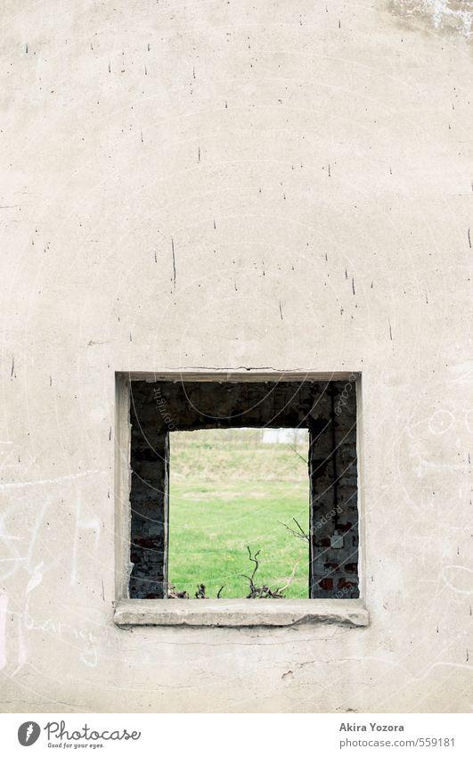 Ausblick ins Grüne Natur Wiese Haus Gebäude Mauer Wand Fenster beobachten entdecken Wachstum Häusliches Leben alt trist braun grau grün Einsamkeit