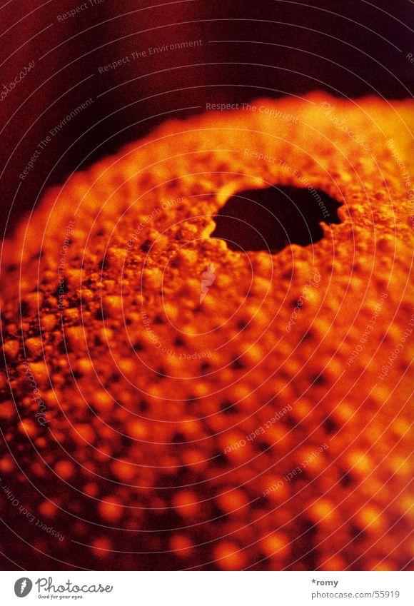 Seeigel rot gelb orange Loch Oberfläche Seeigel