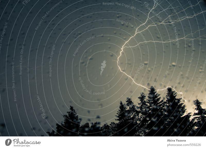 Die Kurve gekriegt. Natur Wassertropfen Himmel Nachthimmel schlechtes Wetter Unwetter Regen Gewitter Baum Wald beobachten berühren leuchten dunkel hell
