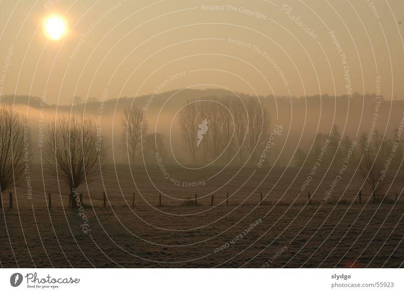 Die Erde lebt Baum Feld Eichsfeld-Wipperaue