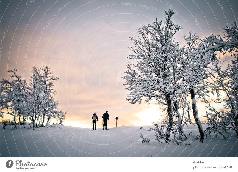 Into the sun Mensch Natur Ferien & Urlaub & Reisen Baum Landschaft Winter Leben Schnee Wege & Pfade Paar Stimmung Freundschaft Zusammensein Ausflug Abenteuer