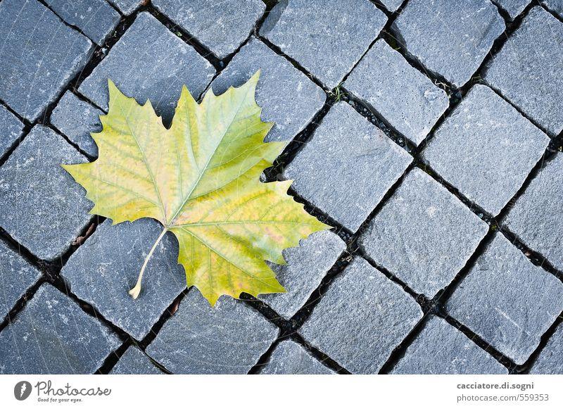 Stadt-Blatt Umwelt Herbst Schönes Wetter Menschenleer Straße einfach Freundlichkeit natürlich schön Spitze unten gelb grau grün Reinheit sparsam demütig