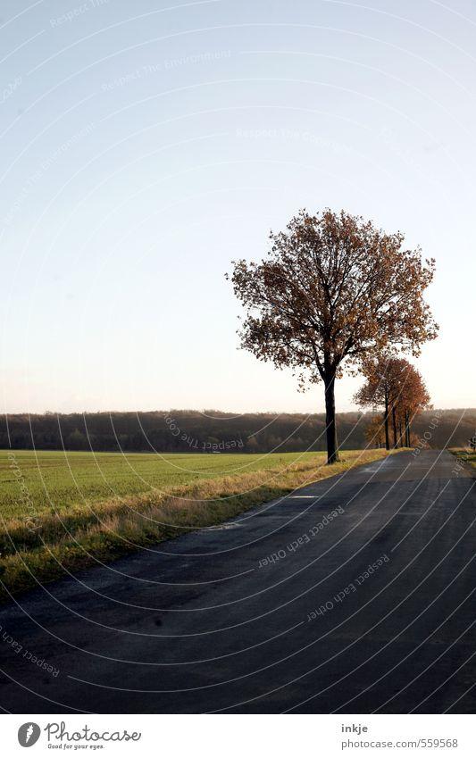 . Umwelt Landschaft Himmel Herbst Winter Baum Gras Feld Feldrand Stadtrand Menschenleer Verkehr Verkehrswege Straßenverkehr Wege & Pfade Bundesstraße dunkel