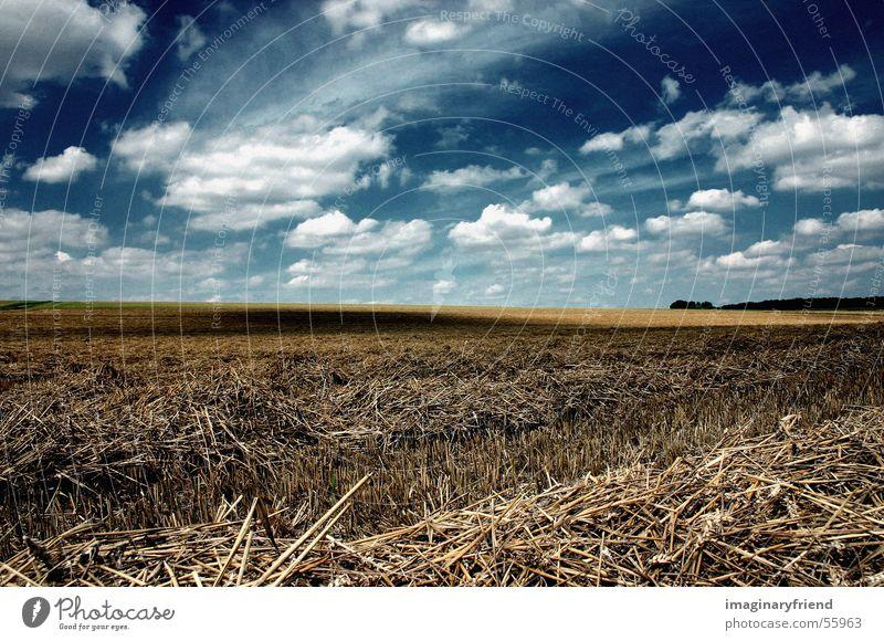 kornfeld Feld Korn himme l wolken Ernte