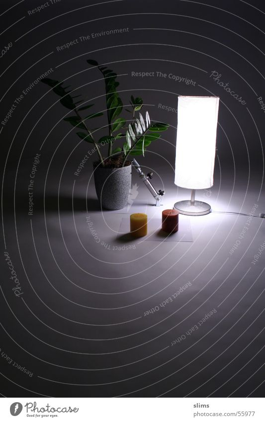 ein Licht im Dunkeln Kerze Stehlampe Pflanze dunkel schwarz Schatten