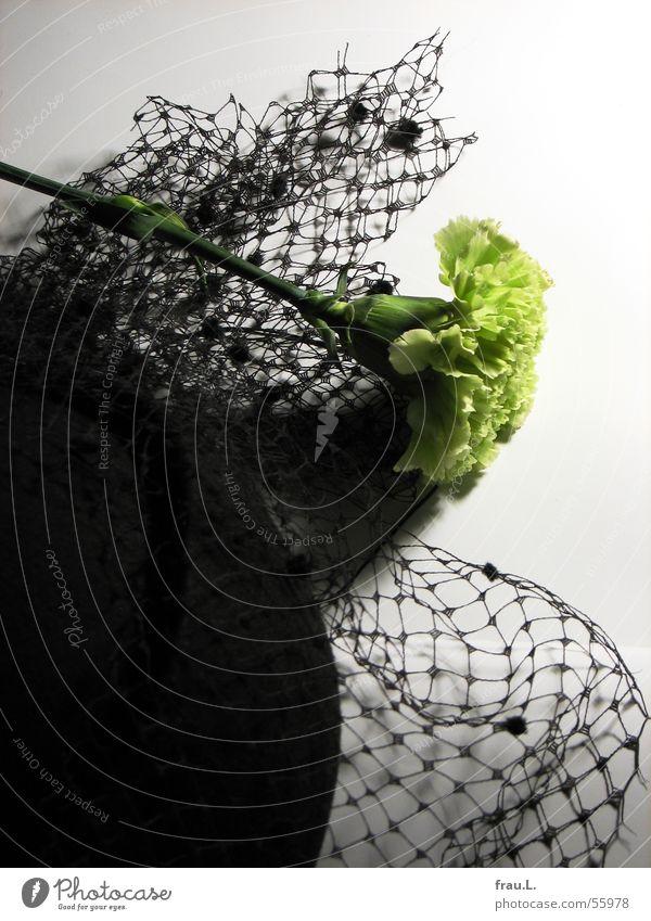 Hut mit Nelke Natur grün Blume schwarz gelb feminin Feste & Feiern Bekleidung Kitsch Spitze Reichtum Hut Schleier ausgehen Nelkengewächse Baseballmütze