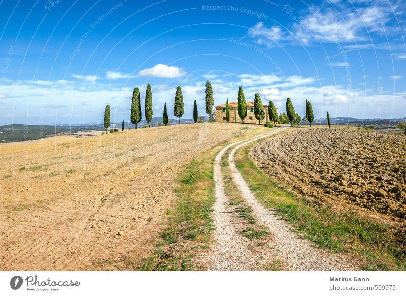 Toskana Himmel Natur Ferien & Urlaub & Reisen blau grün Baum Erholung Landschaft ruhig Haus Umwelt Wege & Pfade braun Feld Tourismus genießen
