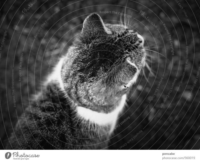 HappyBirthdayPhotocase | looking forward Katze Tier Bewegung Abenteuer Zeichen Fell entdecken Haustier Entschlossenheit Tigerkatze
