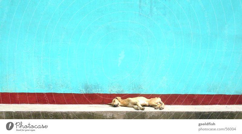 siesta Ferien & Urlaub & Reisen ruhig Tier Hund Stein Mauer Hintergrundbild schlafen Appetit & Hunger Mittelamerika