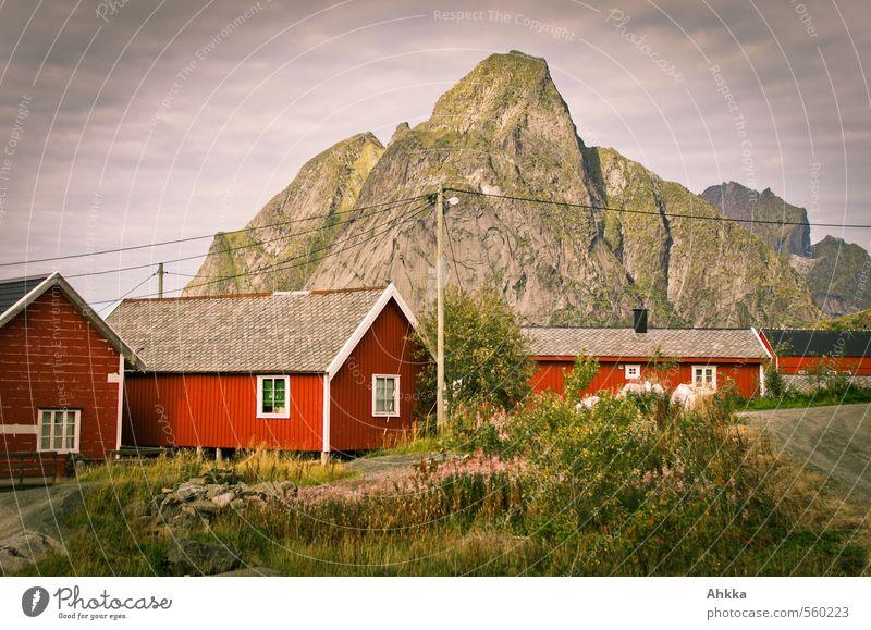 vernetzt Natur Pflanze rot Landschaft Haus Berge u. Gebirge Stimmung wild Sträucher Gipfel Verbindung Duft exotisch Informationstechnologie Strommast Skandinavien