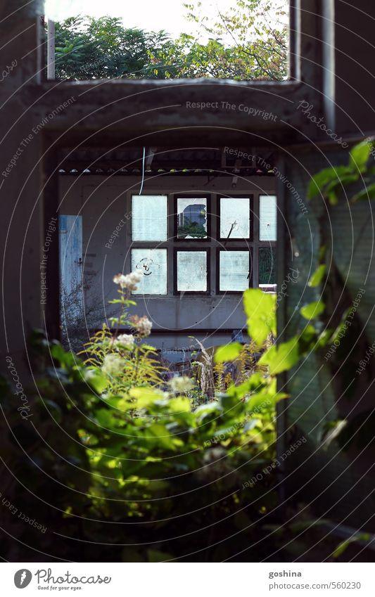 windows through a window Haus Fassade nachhaltig Zerstörung Verfall Pflanze Fabrik Autofenster Glas Zerbrochenes Fenster Idylle morbid dunkel Surrealismus Natur
