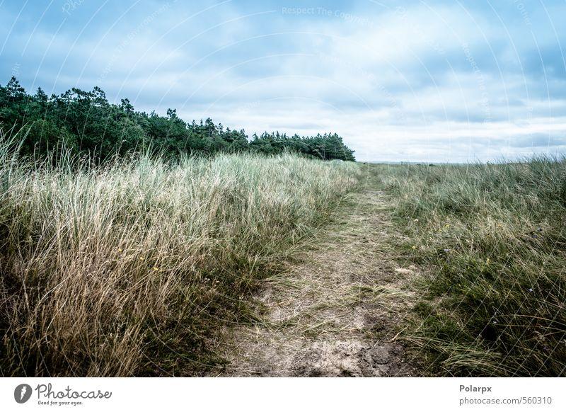 Bereich schön Sommer Umwelt Natur Landschaft Luft Himmel Wolken Horizont Herbst Wetter Baum Blatt Park Wald Straße Wege & Pfade wild gelb grün Farbe vertikal