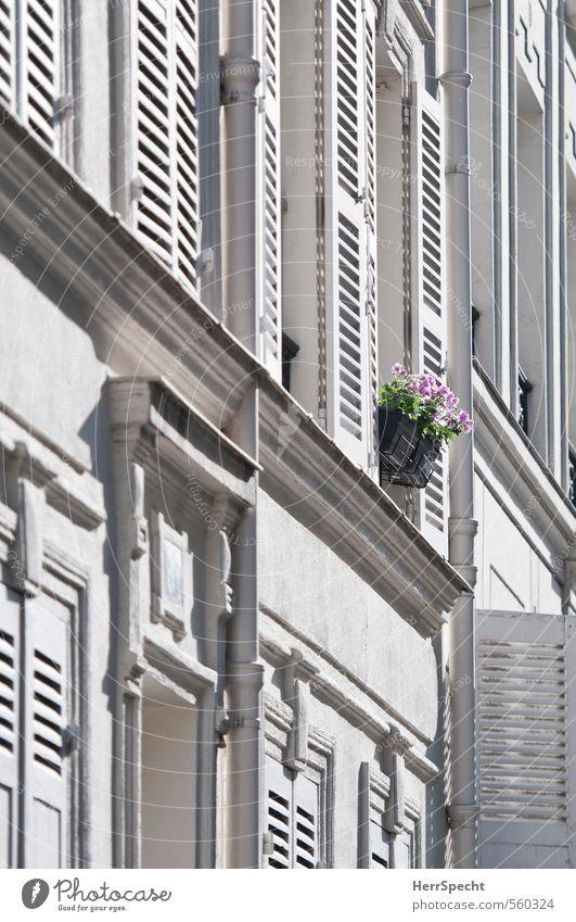 Farbtupfer Stadt schön weiß Farbe Blume Haus Fenster Gebäude Blüte grau rosa Fassade Dekoration & Verzierung einzigartig Paris Stadtzentrum