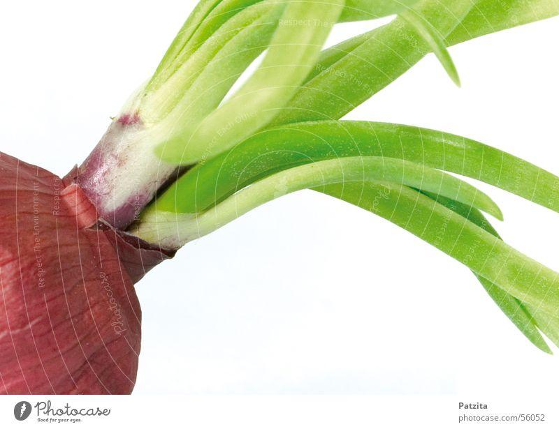 Rote Zwiebel Lebensmittel Gemüse Zwiebel Vor hellem Hintergrund