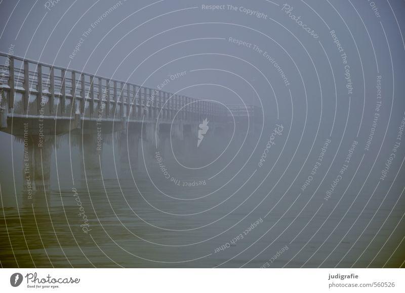 Küstennebel, sehr kalt Natur Winter Klima schlechtes Wetter Nebel Eis Frost Strand Ostsee Brücke außergewöhnlich bedrohlich dunkel gruselig Stimmung Umwelt