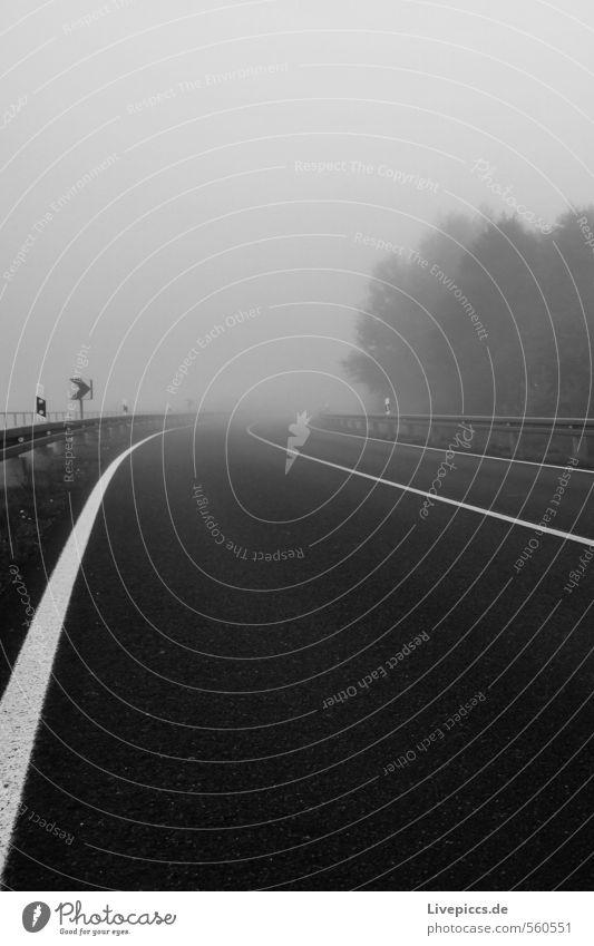 ...von der Jollybrücke Umwelt Natur Landschaft Himmel Wolken Herbst Nebel Pflanze Baum Verkehrswege Straße Wege & Pfade dunkel schwarz weiß Schwarzweißfoto