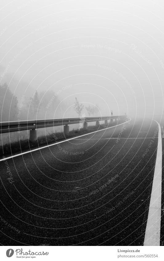 ...in den Nebel Himmel Natur weiß Pflanze Baum Landschaft Wolken Blatt schwarz dunkel kalt Umwelt Straße Herbst Stein
