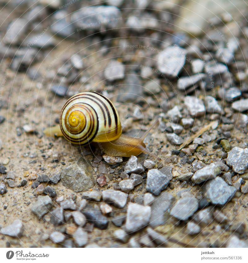 mobile home Natur ruhig Tier Umwelt Bewegung klein Erde Häusliches Leben Geschwindigkeit Güterverkehr & Logistik Mobilität Bogen Schnecke Ausdauer Fortschritt geduldig